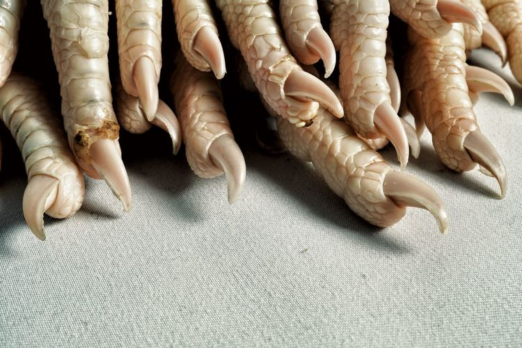kurczak 06 Bird Feet Chicken Feet Claws Skin Texture Scales Avian Reptilian Close Up Full Frame Body Part In A Row Human Hand Large Group Of Objects Raw Food Side By Side Fingers Repetition Group Crowded