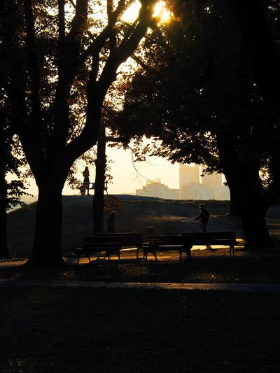 European Cities Belgrade Serbia Eastern Europe Balkans Europe Outdoors Sunlight And Shadow Nature Sky Tree Plant Silhouette Sunlight Trees People City Park Public Places Sun Rays Through Trees Haze Autumn Peaceful Moment Benches