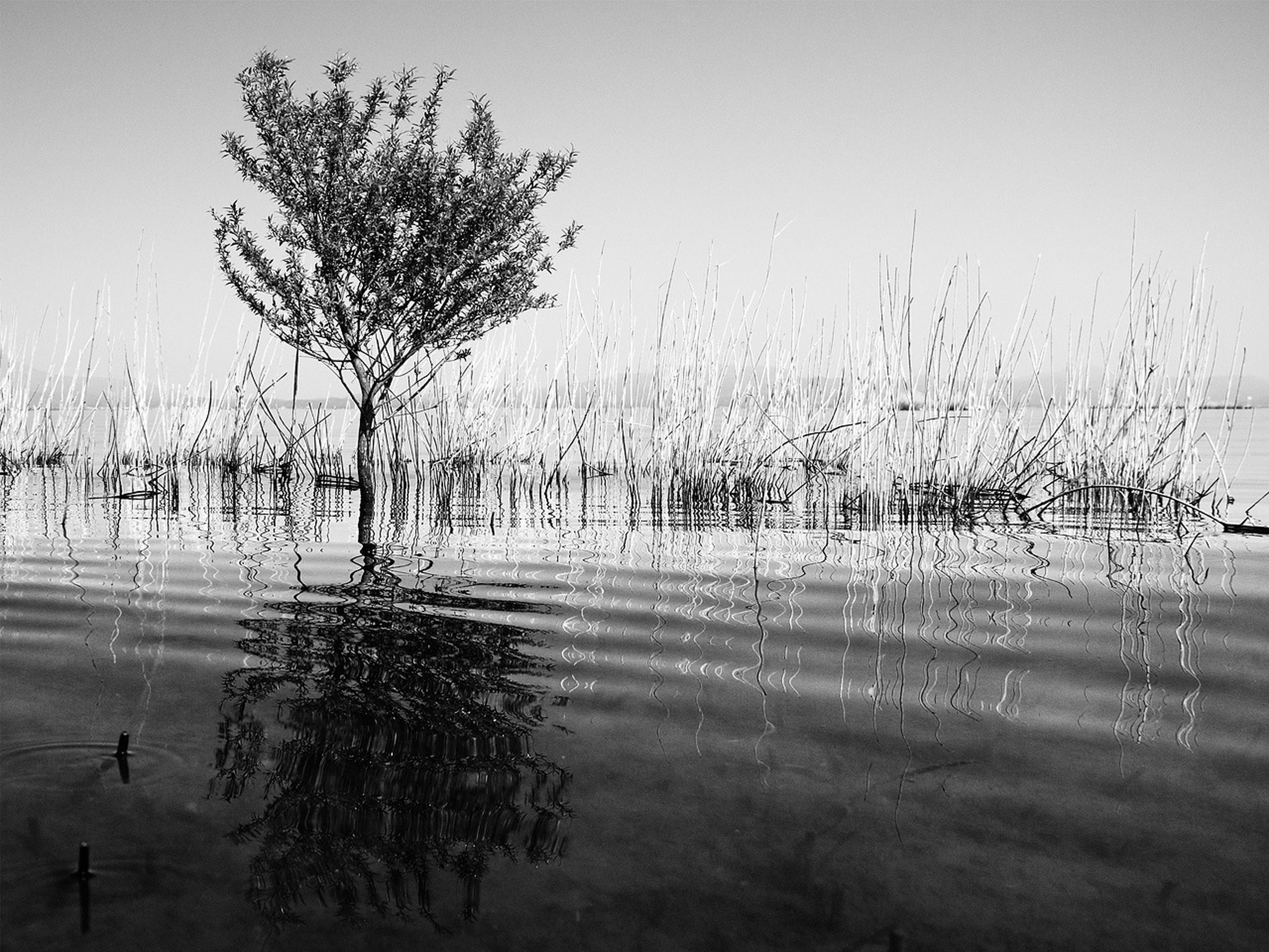 water, tree, fog, tranquility, weather, tranquil scene, nature, wet, foggy, beauty in nature, sky, scenics, lake, rain, field, growth, grass, day, drop