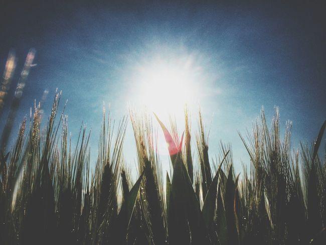 Enjoying The Sun Nature Shootermag Eye4photpgraphy