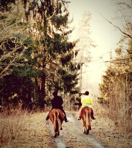 Tree Two People Mammal Animal Themes Walking Outdoors Horses Of Eyeem Horseasses😂