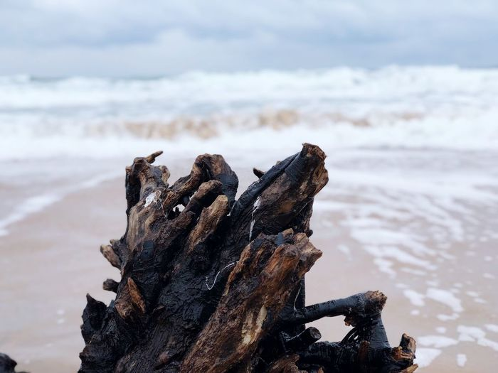 Ocean and wood