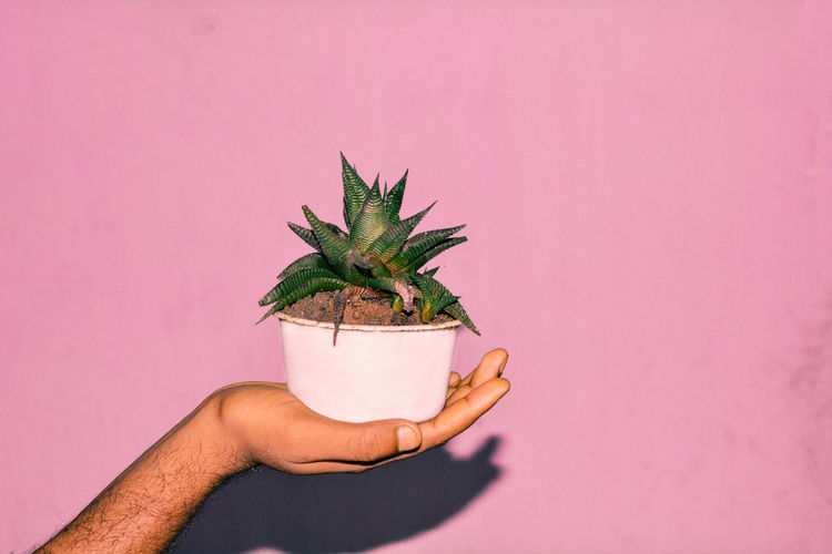 The Still Life Photographer - 2018 EyeEm Awards The Creative - 2018 EyeEm Awards Florist Medical Cannabis Flower Shop Horticulture Marijuana - Herbal Cannabis Potted Plant Marijuana Joint Recreational Drug Cannabis - Narcotic Flower Market Denver Greenhouse Planting Seedling Cannabis Plant Plant Nursery Gardening Glove Flower Pot Sapling