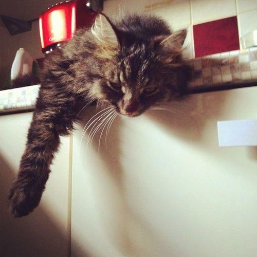 Haha Meine Katze Hängt abbesteKittyderWeltinstaloveinstadailyf4f