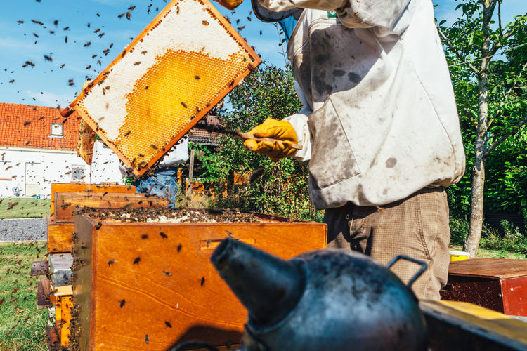 Low angle view of person holding bees
