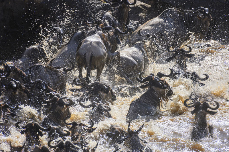 High angle view of horses in river