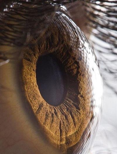 HD closeup of an eye