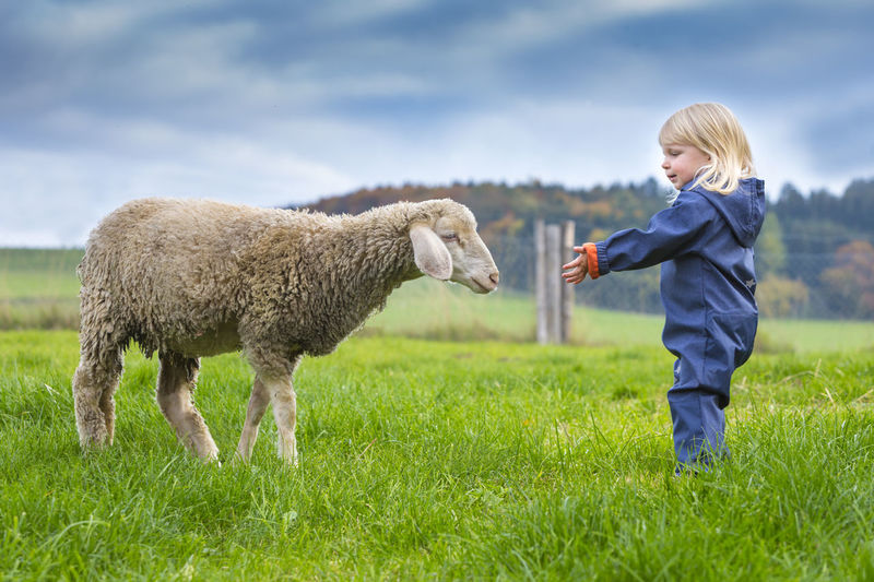 Side view of girl standing by sheep on grassy field