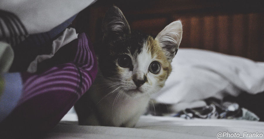 EyeEmNewHere Animal Themes Close-up Day Domestic Animals Domestic Cat Feline Home Interior Human Body Part Human Hand Indoors  Looking At Camera Low Section Mammal One Animal One Person People Pets Portrait Real People Sitting Whisker
