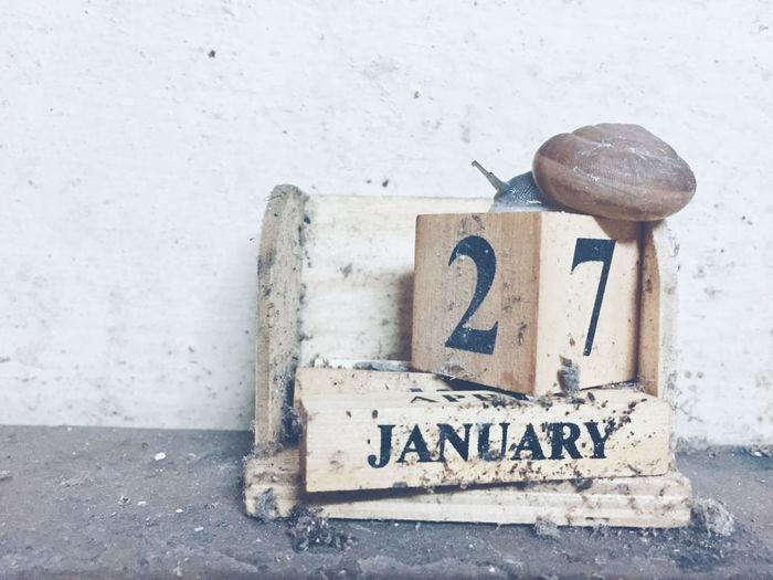 Close-up of snail on broken calendar