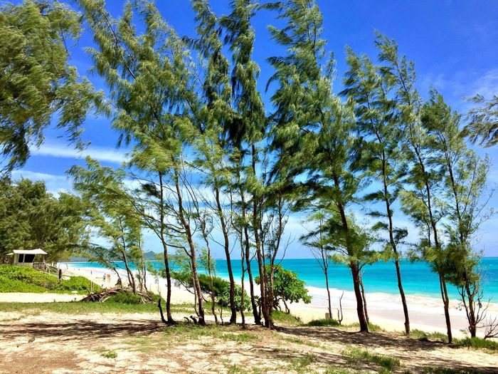 Waimanalo Beach Tree Plant Land Sky Tranquility Day Growth Nature Tranquil Scene Beauty In Nature No People Beach Sunlight Water Blue Outdoors Sea Scenics - Nature