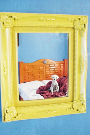 Dog in yellow mirror in front of a blue wall - what are we gonna do next? Swinginginaplumtree Mascot Perro Hund Dog In Mirror Love Dogs Love Animals Little Dog Dog In Bed Curious Dog Happy Happy Anímals Dog White Dog EyeEm Selects No People Bed Toy Architecture Stuffed Toy Yellow Animal