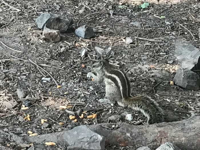 Squirrel Eating Outdoors Animal Themes Without Edit ^^ EyeEmNewHere Click On IPhone 7