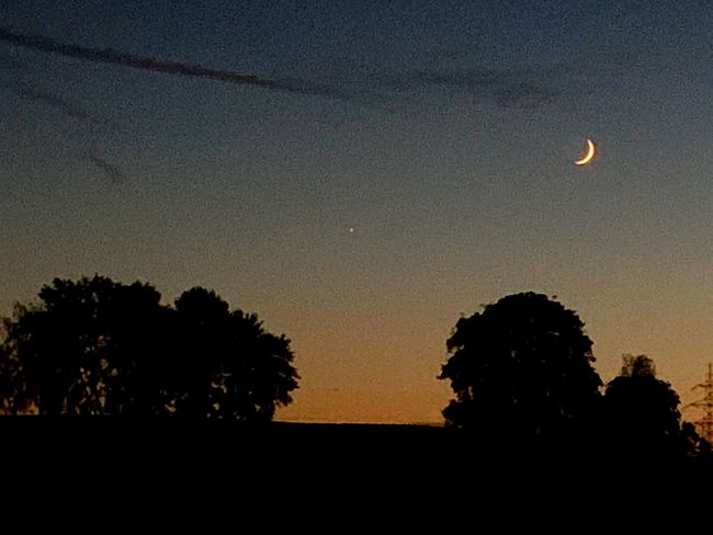 Sky Silhouette Tree Plant Beauty In Nature Scenics - Nature Tranquility Night Tranquil Scene Space Outdoors Low Angle View Astronomy Nature Moon No People Sunset Idyllic Growth Star - Space