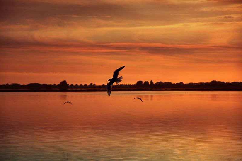 beautiful moment😍 Seagulls And Sea Seagulls Seagull Golden Hour East Sea Animal Animal Wildlife Animal Themes Animals In The Wild Vertebrate Water Bird Sunset Sky Beauty In Nature Tranquility Nature Cloud - Sky Scenics - Nature Orange Color Reflection Tranquil Scene No People