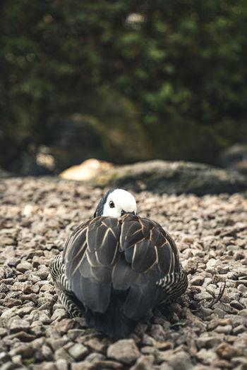 Close-up of bird on rock