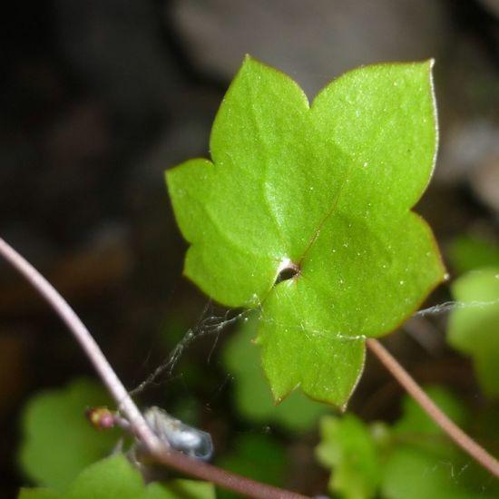Greenleafe at Church Photography Leaf Green Art