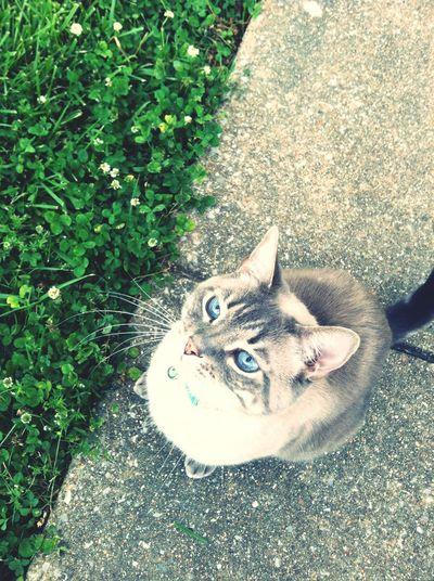 Shiro Enjoying His Summer.