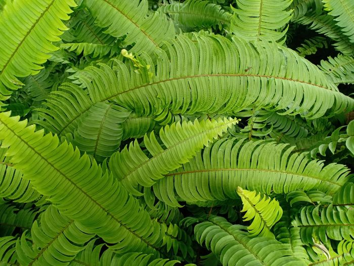 Leaf Fern Concentric Backgrounds Close-up Green Color Moss Greenery Lichen Green Blossoming  Spring Farmland Grassland Young Plant Countryside Vegetation Lush Stream Fungus Leaf Vein Woods Tree Ring Natural Pattern Lush Foliage Bark Branch Flora