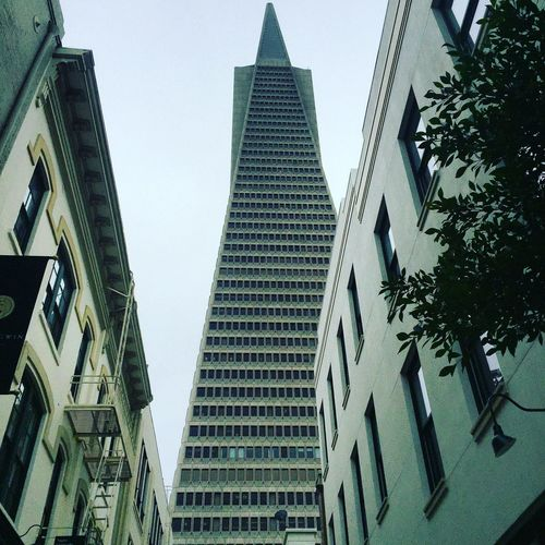 Architecture Building Exterior Skyscraper Low Angle View City Tall - High Office Building Tower Tall Modern Built Structure Building Story City Life Financial District  Urban Skyline San Francisco TransAmericaBuilding Transamerica Pyramid California United States USA