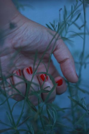 Can I just grab it? No. Lavander Hand Skin Soft Life Naturelovers Aesthetics Nature Photography Simplicity Vibesofvisuals Unity Touch Fingers EyeEm Best Shots EyeEmNewHere EyeEm Nature Lover EyeEm Gallery EyeEm Selects EyeEmBestPics Human Hand Flower Nail Polish Tree Red Fruit Close-up Plant