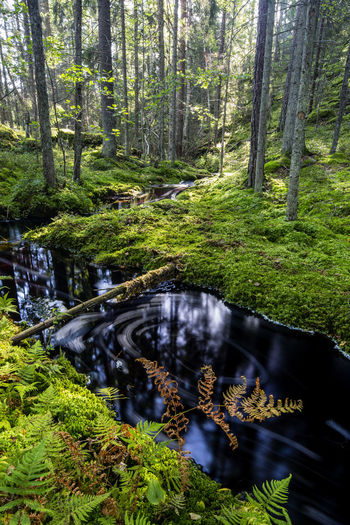 Peaceful Beauty In Nature Day Forest Freshness Green Color Harmony Nature Nature Photography No People Outdoors Peaceful Recovery Scenics Stream Stressless Sweden Sweden Nature Tranquil Scene Tranquility Tree Water