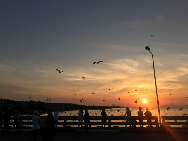 Sunset Bird Flying Silhouette Sky Nature Sea Beauty In Nature Beach Flock Of Birds Large Group Of People Outdoors