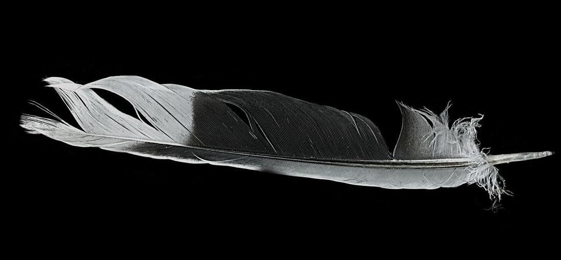 Close up of black background