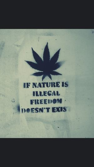 Ganja ♡ Weed Lover ♡ Where Is My Freedom? ♡ Natural Beauty Free The Green