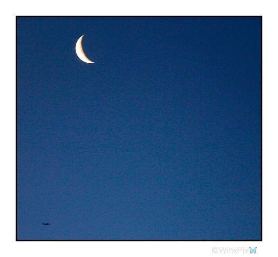 """""""The moon and the plane"""". Early morning shot. Crescent Moon Crescentmoon Moon And Blue Skies Moon And Plane Love The Moon Moon Lover No People Plane In The Sky"""