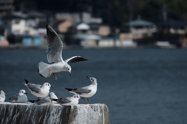 Close-up of seagulls perching on sea shore