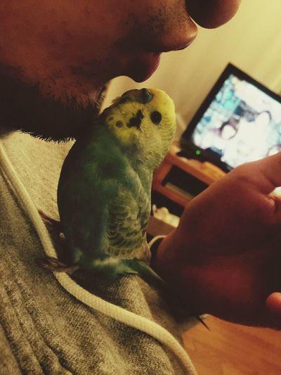 Birds Parakeet cute