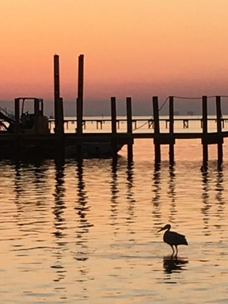 Bird in the sunset Sunset Animal Themes Water Sea One Animal Animals In The Wild Nature Bird No People Waterfront Outdoors Beauty In Nature Sky Navarre Florida Silhouette Navarre Florida Travel Destinations Boat In Water Docks