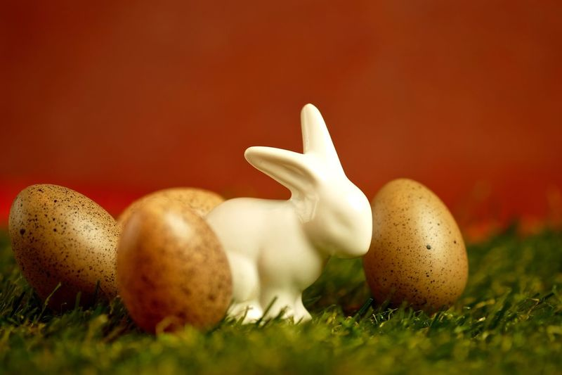 Close-Up Of Bunny Amidst Easter Eggs On Grass