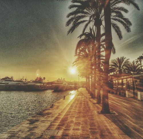 Walking Around Taking Photos Sun Palm Trees