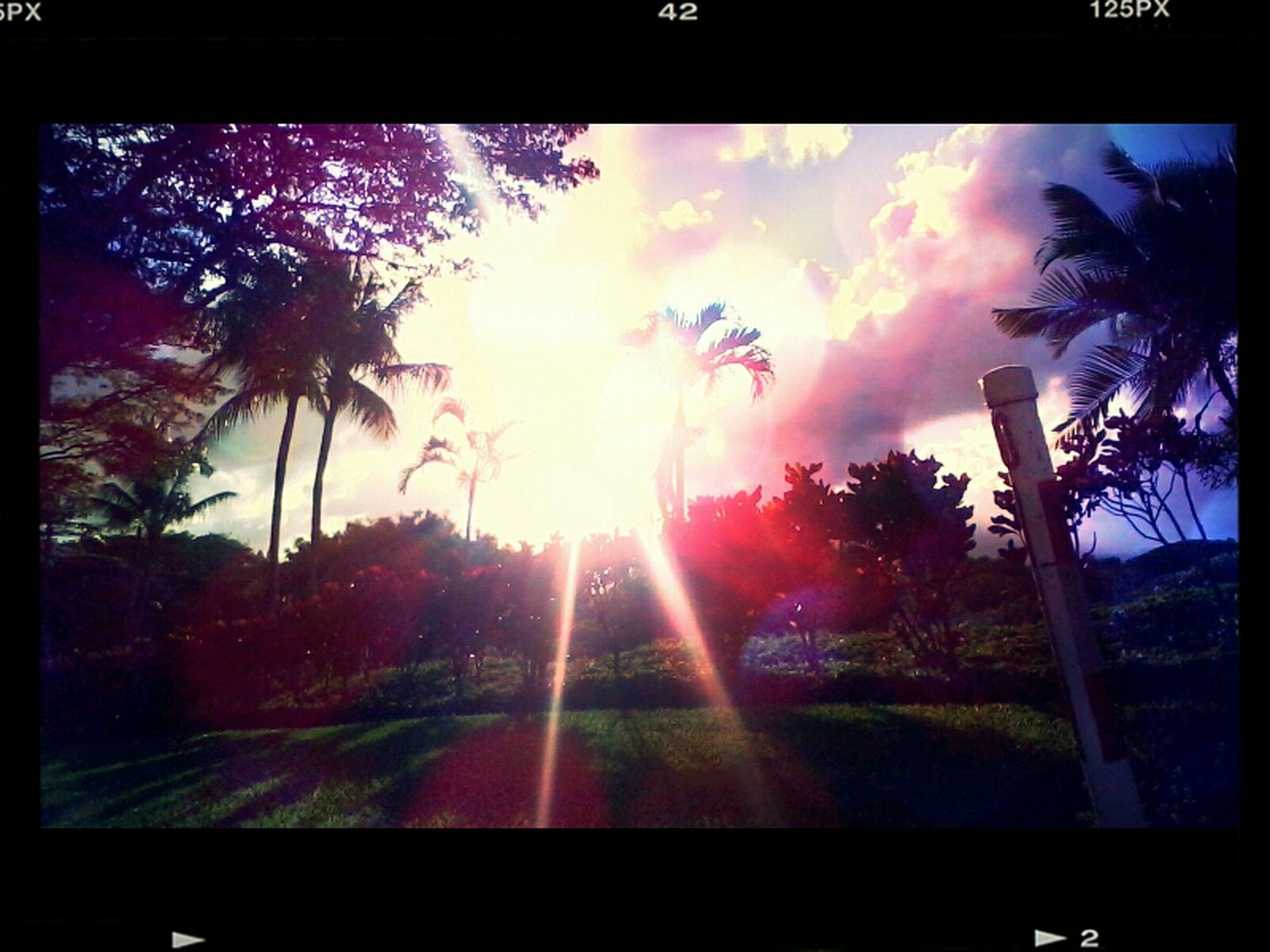 transfer print, tree, sun, auto post production filter, palm tree, sunbeam, sky, sunlight, silhouette, lens flare, sunset, growth, nature, cloud - sky, beauty in nature, tranquility, no people, scenics, outdoors, tranquil scene