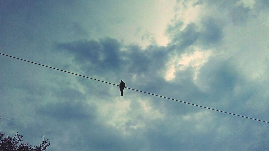 Bird Telephone