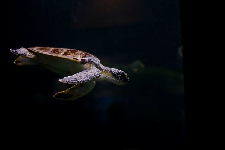 Little turtle in a glass cabinet...🐢🐢 Reptile Sea Life Underwater