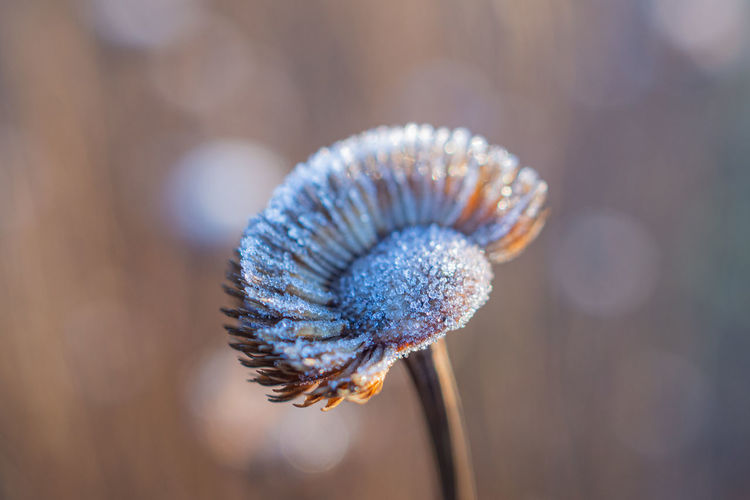 Close-up of frost on plant during winter