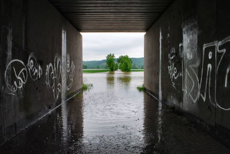 Flood Flooded Streets Flooding Tunnel Tunnel View Landscape Landscape_Collection Water Reflections Water Water_collection Road Trees Graffiti Light And Shadow Nature Nature_collection Natural Disaster Eye4photography  EyeEm Masterclass Frame It! Flooded Geometry Geometric Lines Countryside Nikon