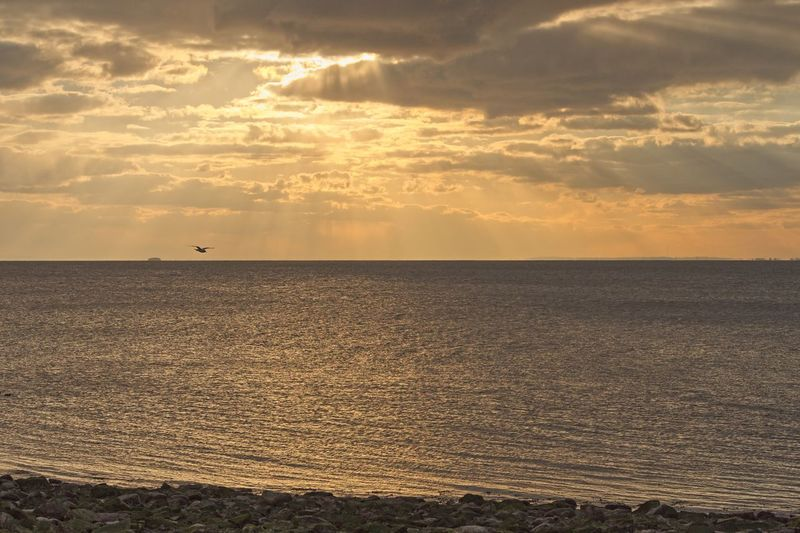 Sun Rays Bird Flying Sea Tranquility Scenics Sunset Beauty In Nature Nature Tranquil Scene No People Outdoors Horizon Over Water Sky Water Beach Cloud - Sky Idyllic Sun Day