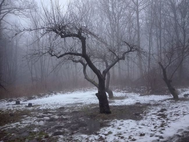 Sorø Sønderskov Forest Sønderskov Melting Snow Foggy Mist Misty Nature Day Outdoors No People Tree Snow Cold Temperature Winter Bare Tree Water Fog Forest Branch