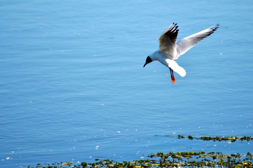 Bird Fishing Dive