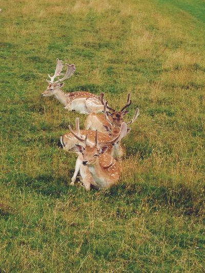 Wildlife Non-urban Scene Herbivorous Countryside Herd Solitude Animal Themes Grassy