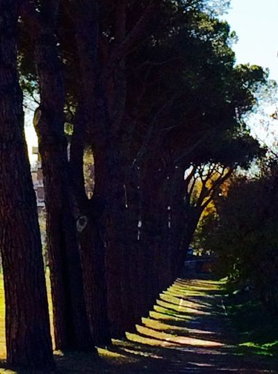 Shadows in Growing RePicture Growth Light And Shadow Moving Shadows Rows Of Things Roma Rome Perfect Day Winter Trees Showcase: December The Way I'm Seeing It...... On The Way At The Park Chrome Schattenspiel  Light Trough The Trees Play With The Light