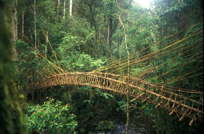 Papua New Guinea Border between Papua New Guinea and made bridge bush materials. Forest Beauty In Nature Tree No People