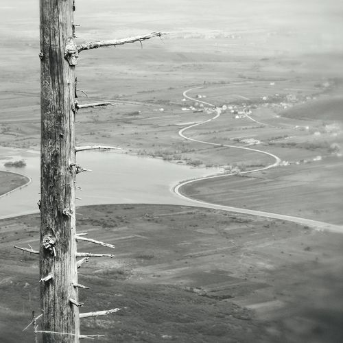 High angle view of tree trunk against landscape