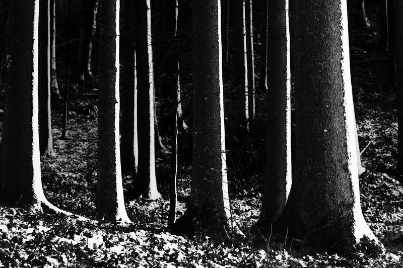 Low section of trees in forest