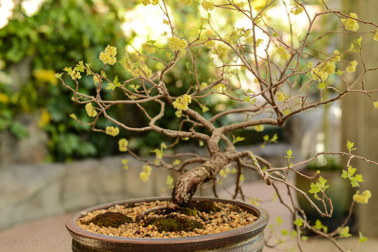 Travel Photography , Nature Tree_collection  Flowers,Plants & Garden