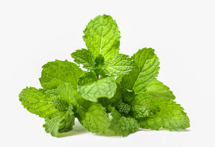 Fresh mint leaf isolated on white studio shot Green Growth Aroma Copy Space Dieting Food Fragrant Freshness Garden Herb Leaf Medicinal Mint Nature Opject Organic Pepermint Properties Refreshing Smell Spice Still Life Useful Vegetable White Background
